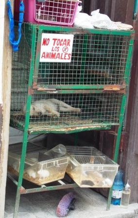 Aumentan los Negocios para la Venta de Animales Afectivos (1)