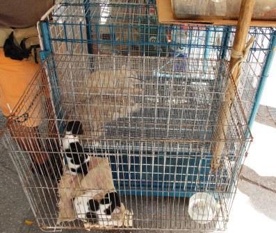 Aumentan los Negocios para la Venta de Animales Afectivos (3)